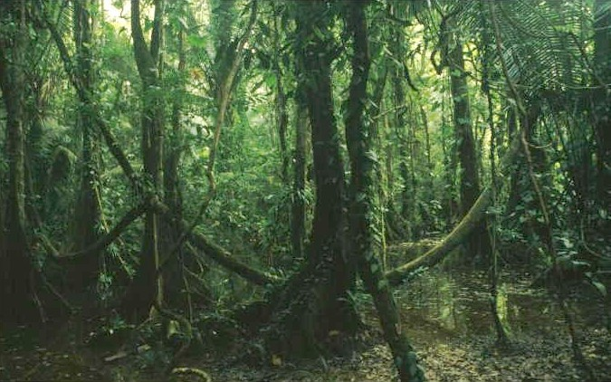 junglebelize.jpg